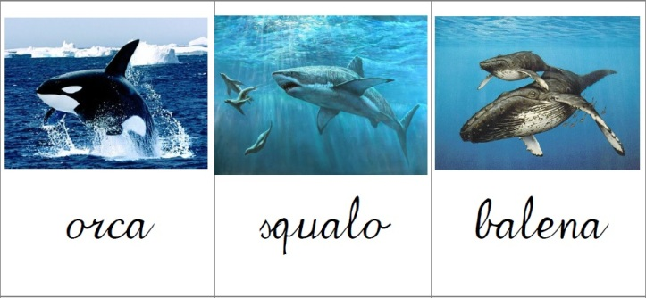 carte-nom-animali-marini